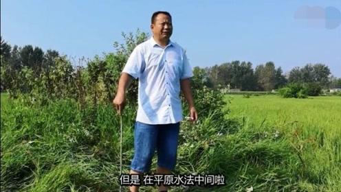 风水大师张少波,在淮河畔讲解平原风水,断定墓主后人有肝癌之症
