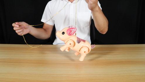 """玩具小猪还能这样玩?绳子一绑开关一按,别人遛狗你""""遛猪"""""""