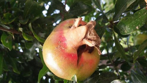 这些9月应季水果上线了,水果控们可别错过