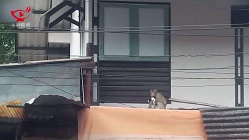 """泰国顽皮猴子""""绑架""""一只小猫后将其带走,路人都捏了把汗"""
