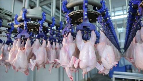 国外的鸡肉加工厂,鸡还没反应过来就被掏空,网友:没有灵魂