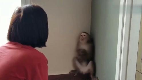 猴子闯祸不满主人教训自己,还和主人顶嘴,主人都被气笑了!