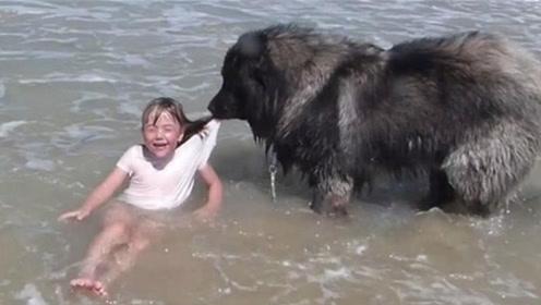狗狗究竟有多忠心?小主人玩水误判溺水,狗狗瞬间做出这种事