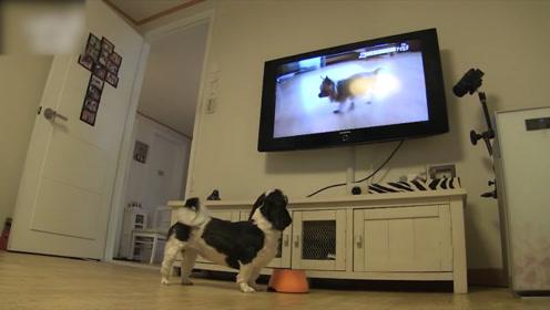 狗狗爱看电视竟是因为这个,主人知道真相后,流下了泪水
