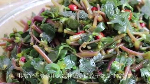 """农村这一野菜,俗称""""长命菜"""",学会这几步,做出来美味可口"""