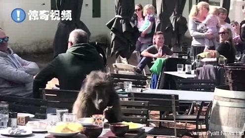 胆大包天!南非一狒狒霸占食客座位和餐食,怡然自得地享用美味