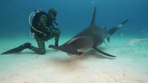 """外国发明""""水下隐身衣"""",下水后自动隐形,很多生物都看不到你!"""