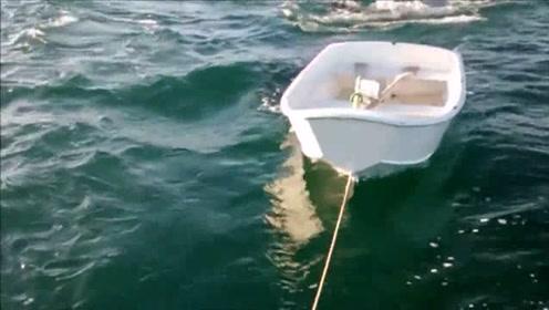这一家人海上游玩与虎鲸互动玩耍