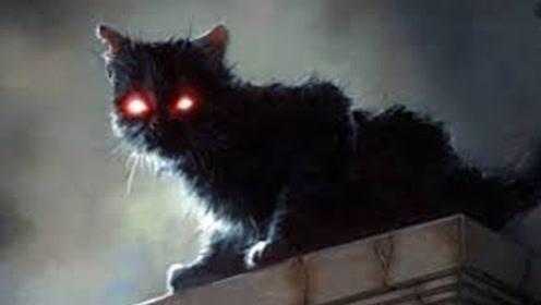 为什么人去世后猫不能靠近尸体?这不是迷信,有一定科学依据