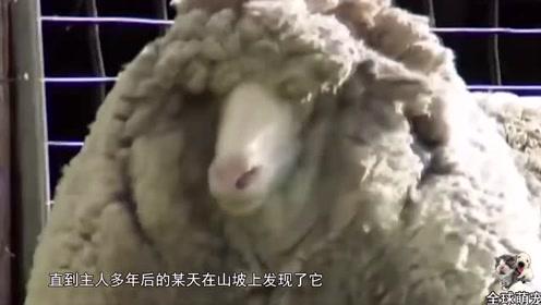 羊:师傅稍微给我修一下就可以了,你们全给劳资剪了,几个意思