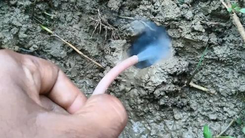 用这种方法捕捉,洞里的家伙一个劲儿的往外钻