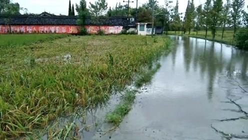 突发!四川什邡局地遭遇大暴雨 农房进水农作物被淹