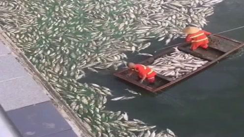 台风过后,鱼塘主人估计都要哭了!