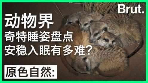 动物界奇特睡姿盘点:它们安睡有多难?