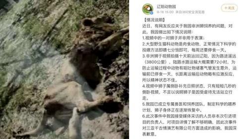 """辽阳动物园再回应狮子""""骨瘦如柴"""":之前说错了"""