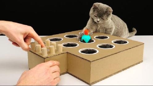 """小伙DIY纸板""""打地鼠"""",作品出来后,猫咪都快玩急眼了"""