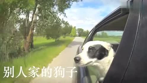 别人家的狗子跟自己家的狗子,是不是很不一样!