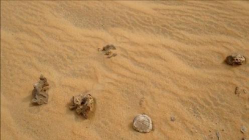 在沙漠看到石头要捡起,有什么作用吗?驴友:捡起你就发财了