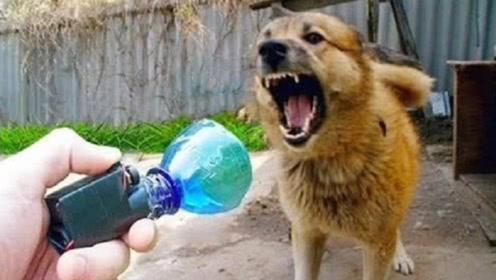 国外小伙用塑料瓶制作驱狗神器,按下开关,来一群恶犬都不用怕了