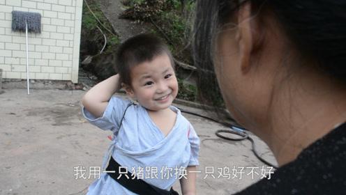 小孩用猪和外婆换鸡,外婆开心答应,结果看到猪后懵了:这是猪?