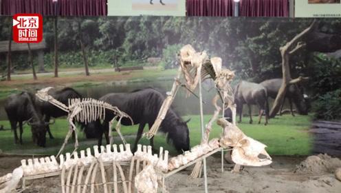 """震撼!农民收藏数千件古生物化石价值5千万 仿佛""""侏罗纪公园"""""""