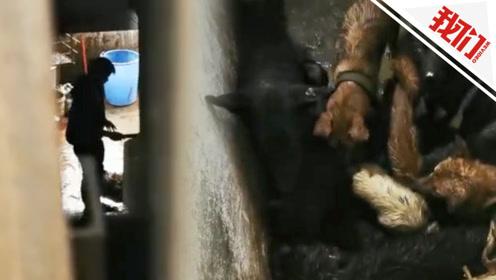 贵阳一非法屠狗场被取缔 志愿者救出数十只宠物狗