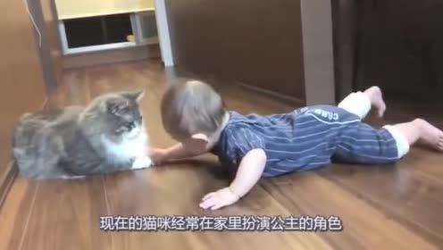 猫咪陪小主人玩,竟然还到主人面前鼓励他学走路,猫咪举动太有爱