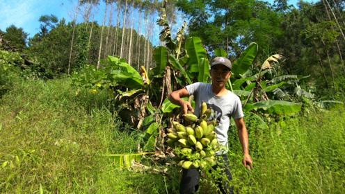 憨吃哥:山谷里砍了一串大蕉,吸收着山泉水长大的,靓货!
