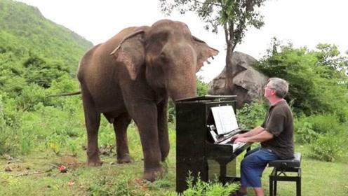 60岁大爷日复一日,坚持给大象弹钢琴,大象听后都流下眼泪了