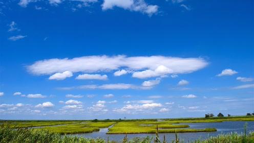 马云捐款1亿元保护西溪湿地?今天带你了解什么是湿地栖息地