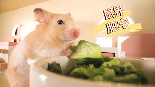 胖仓鼠很满意自己的肥宅生活,却突然后悔,究竟发生了什么