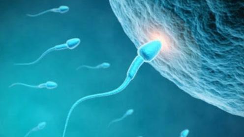 """镜头记录女性""""受精""""全过程,犹如科幻片!难怪女生都不愿怀孕"""