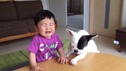 """狗狗和宝宝在一起除了嬉戏打闹,有时也会""""反目成仇"""""""