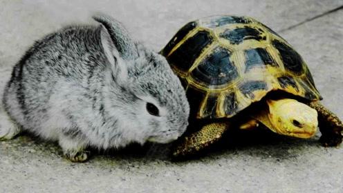 千年的王八万年龟,百年的兔子没人追是啥意思?还有人不明白!