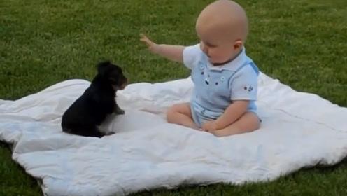 宝宝和狗狗在草坪玩耍,宝宝一巴掌把狗狗给拍翻了,家人都看愣了