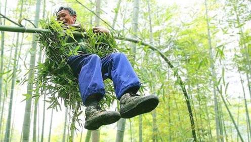 """中国最后一位""""竹海老人""""!70岁仍飞跃竹海中,独门技艺快失传"""