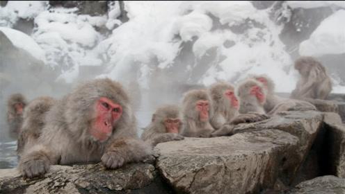 日本动物园真奇怪,什么动物喜欢泡澡,网友:看上去好惬意!
