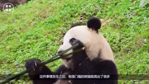 俄罗斯租借中国大熊猫,到期后不想归还,竟提出交换条件