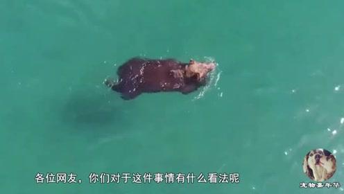 无人机拍到罕见画面,一只神秘的生物出现在海面,让人费解