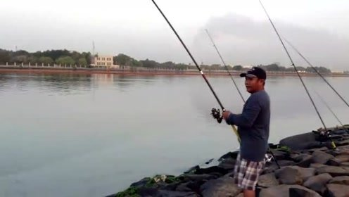钓鱼还是用海岸,岸边布满海竿,大鱼连着上