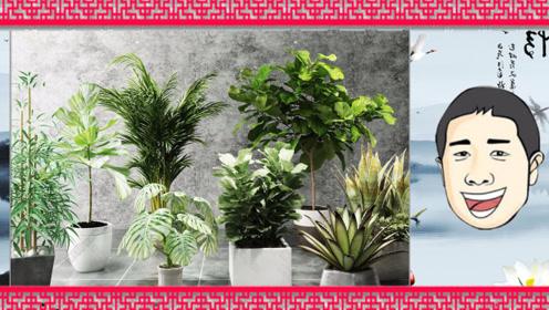 招财旺财选什么样的绿植以及摆放技巧