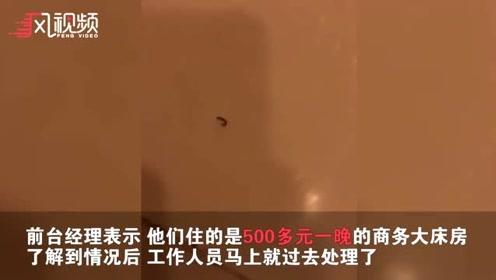 五百一晚酒店被曝发现多只蛆虫 经理:确实存在 杀虫清理