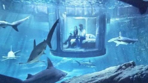 """全球最""""可怕""""五星套房,免费和35条食人鲨共眠,敢睡倒贴钱!"""