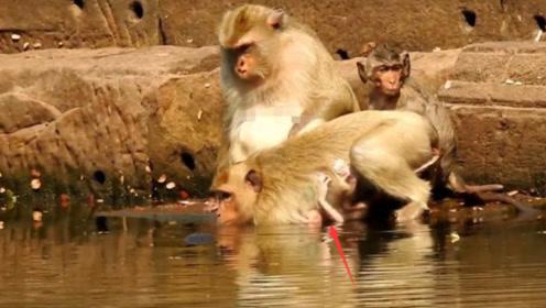 大猴子下水洗澡,完全不顾小猴子的感受,可怜的宝宝泡的好惨