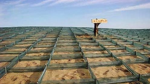 """中国沙漠圈养150只""""猛兽""""一天狂吐40亩绿洲,堪称沙漠救星"""