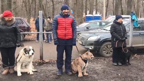 狗狗去培训班,发现同桌竟是只美洲狮,狗子的表情太搞笑了