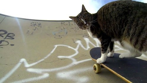 动物成精系列!猫咪玩起了滑板,网友:这技术我都比不上
