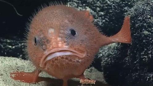 科学家发现会憋气的鱼 为偷懒能在水中憋气4分钟之久!