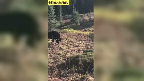 一家人登山偶遇黑熊 男孩的一个举动救了所有人