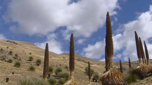 """沙漠中的""""生命之树"""",可以存储吨的水,种到我国后却变成这样"""